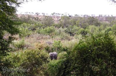 Elephant feeding (4)