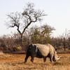 Rhino power