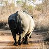 Rhino had enough and walks away