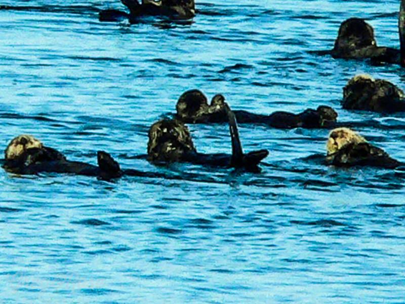 Otter Frolick