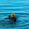 Otter Observation
