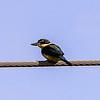Kinfisher
