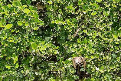 Spot the Sparrow