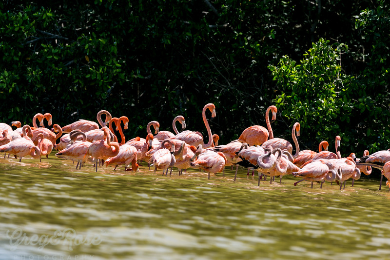A Pink Flamingo Flock