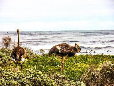 Ostrich pose