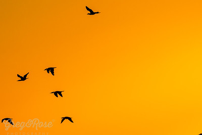 Silhouette of bird morning flight