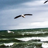 Gull storm waves and beach