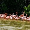 Pink Flamingo Flock.