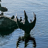 Dramatic Swan