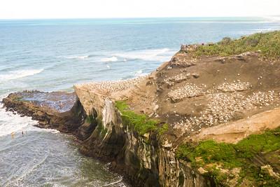 The outcrop separates Maori Bay from Murawai Surf Beach