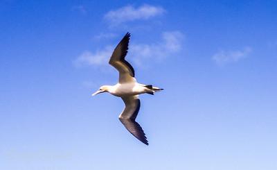 Majesty of flight.