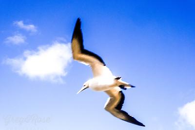 I am built to soar the ocean