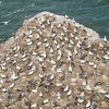Hundreds of adult and junior birds