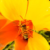 Bee Shadow Profile
