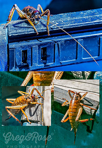 Weta 3 Views