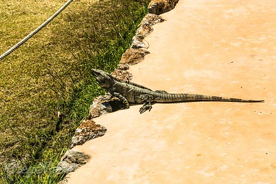 Reptiles we have encountered