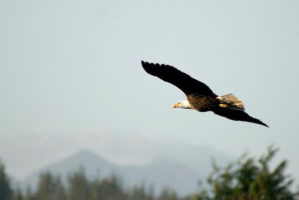 pbase eagle 4