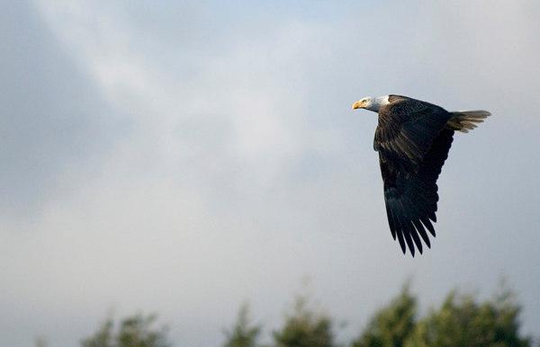pbase eagle 5