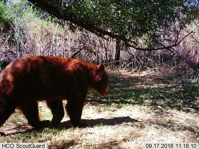 Recent Santa Margarita Ranch Wildlife Captures