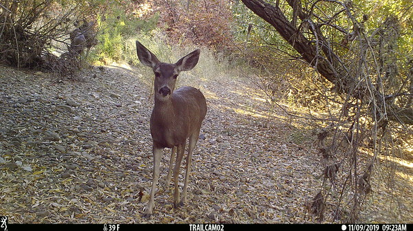 Recent Vineyard Elementary School Wildlife Camera Uploads