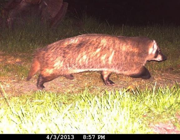 Badger 4/3/13