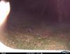 Raccoon 2/26/12