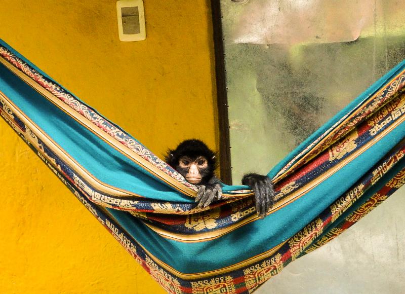 La Senda Verde in Bolivia