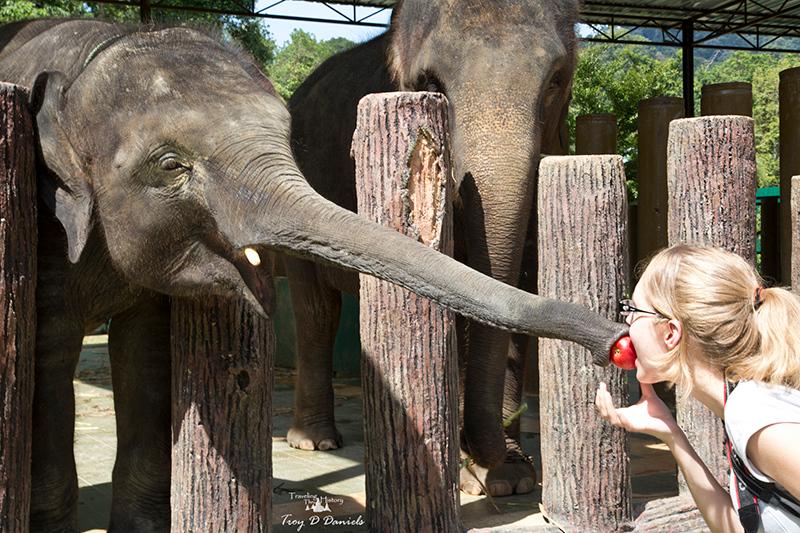 Kuala Gandah Elephant Sanctuary in Malaysia