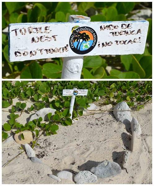 Centro Ecológico in Akumal Mexico