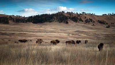 Guarding the Herd