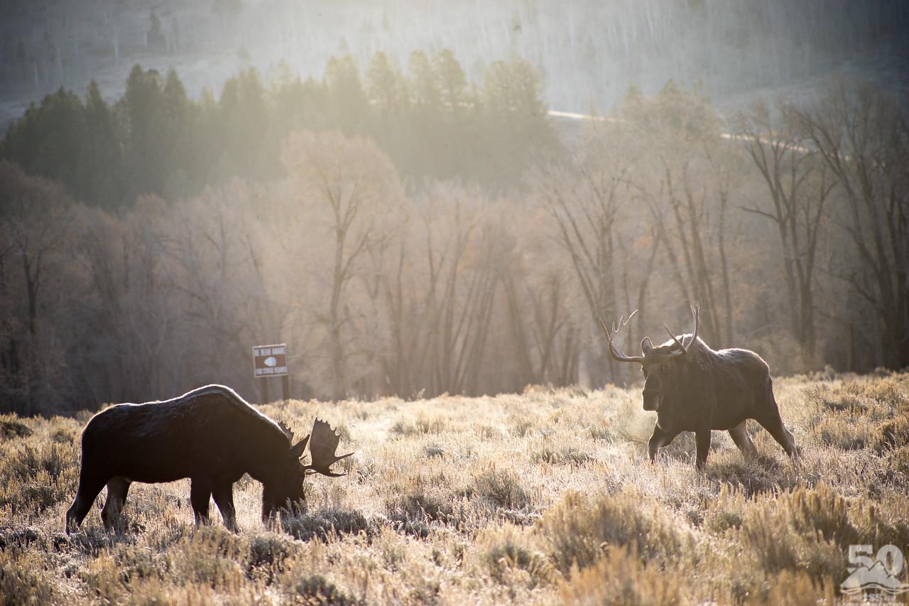 Dylan Klinesteker - Be moose aware