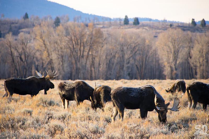 Dylan Klinesteker - All the moose