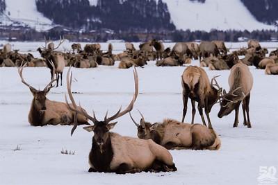Sarah Ernst - Drop Tine Elk