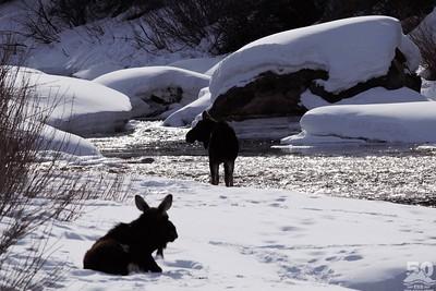 Sarah Ernst - Life at Moose Pace