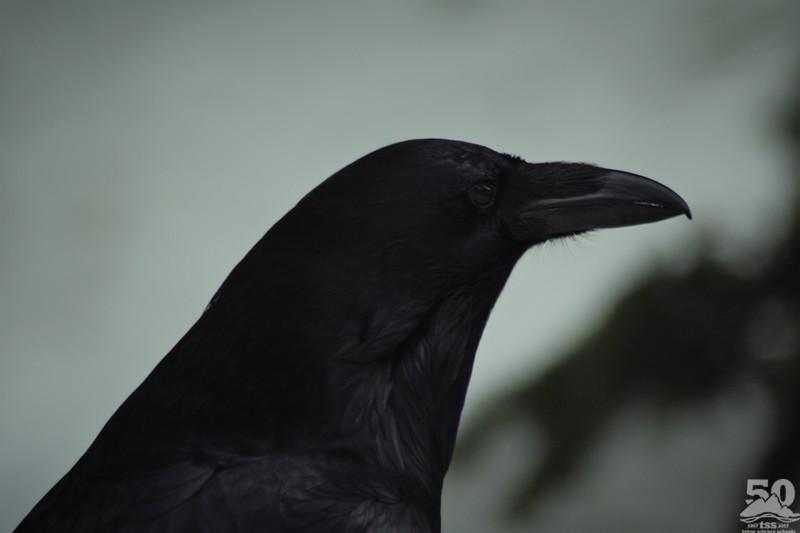 Sarah Ernst - Raven Profile