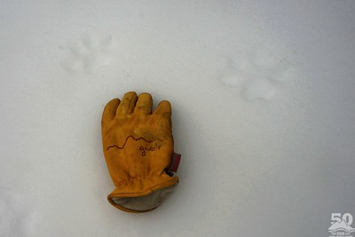 Dylan Klinesteker - Pebble Creek Wolf Tracks