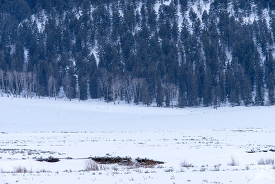 Dylan Klinesteker - Coyote In the Lamar Valley