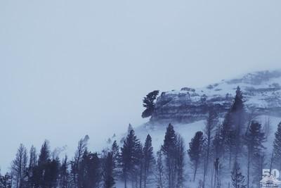 Sarah Ernst - The Moose Head of Druid Peak in Extreme Wind