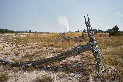 Dylan Klinesteker- Geyser and Fallen Tree
