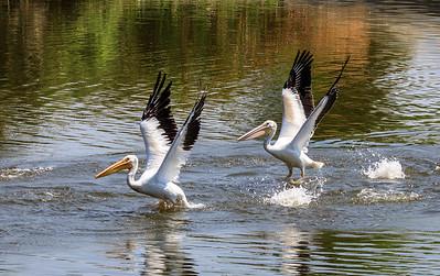 """Hey! Look! I'm Walking on Water!"""
