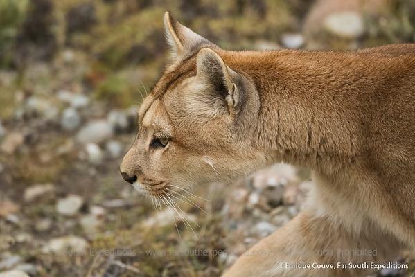 Wildlife - Fauna