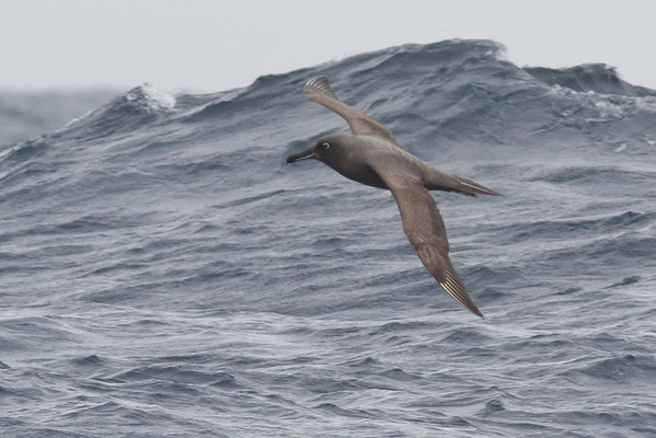 Eaglehawk Neck, TAS September 01, 2013 IMG_0723