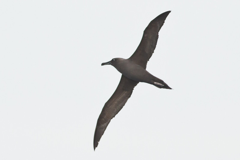 Eaglehawk Neck, TAS September 01, 2013 IMG_0726