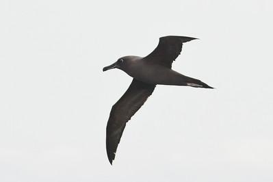 Eaglehawk Neck, TAS September 01, 2013 IMG_0719