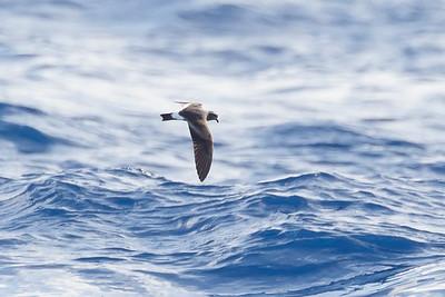 April 09, 2016 8:39:30 AM Britannia Seamount, QLD _MG_4226
