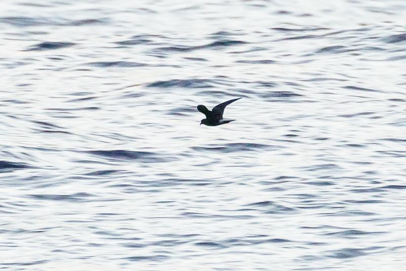 April 09, 2016 5:33:57 PM Britannia Seamount, QLD _MG_5896