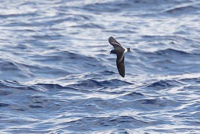 April 09, 2016 8:34:42 AM Britannia Seamount, QLD _MG_4154