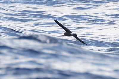 April 09, 2016 8:34:50 AM Britannia Seamount, QLD _MG_4166
