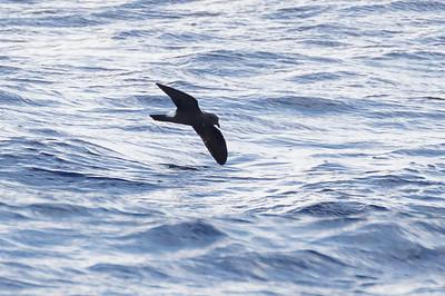 April 09, 2016 8:34:55 AM Britannia Seamount, QLD _MG_4174
