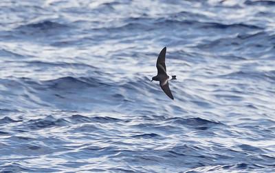 April 09, 2016 8:34:42 AM Britannia Seamount, QLD _MG_4153